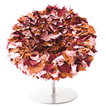 bouquet armchair  - Moroso