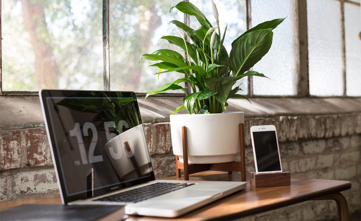 Superior Case Study Raised Table Top Planter With Wood Stand