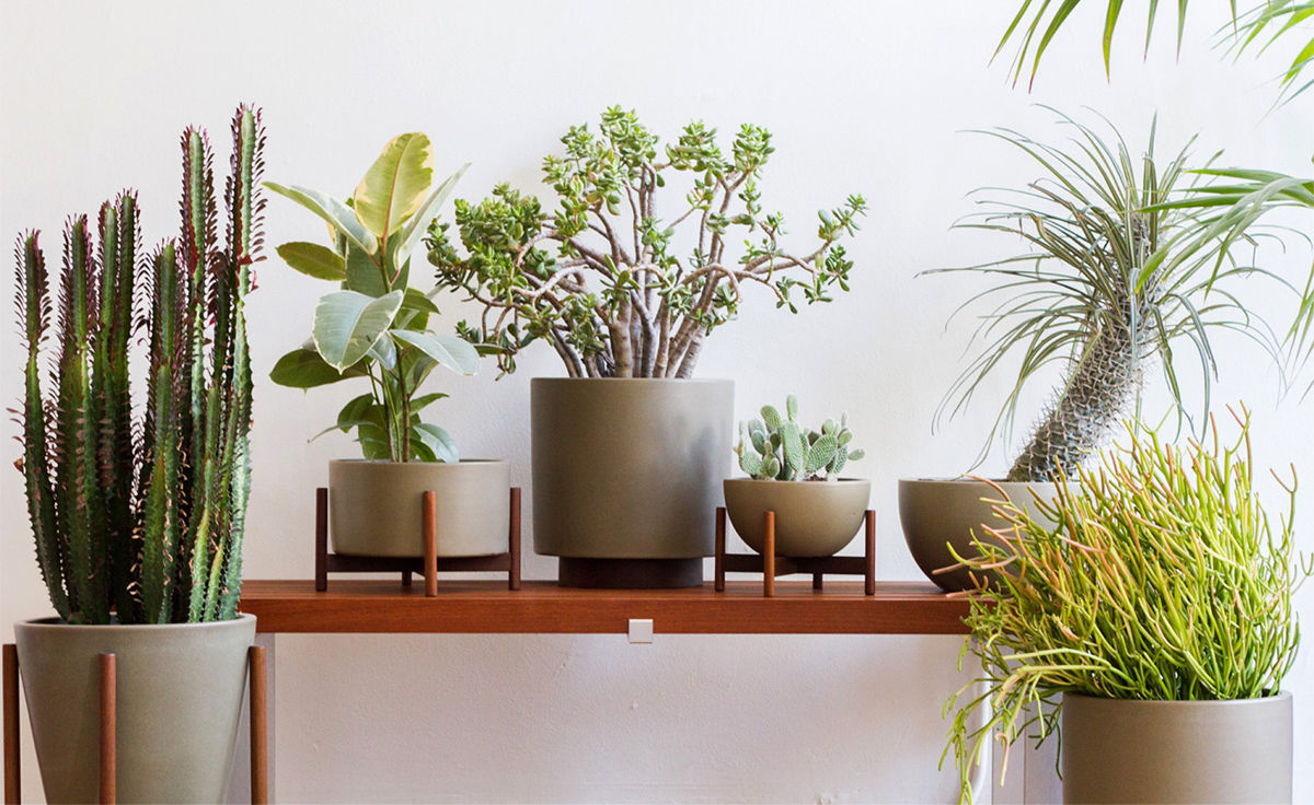 Case Study® Table Top Cylinder Planter With Wood Stand